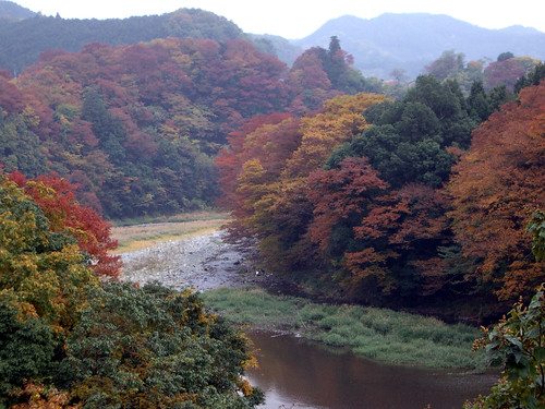 autumn leaves, 2008 okutama, tokyo