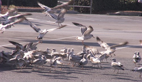 Gull Convention 2