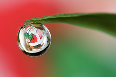 Christmas dewdrop #1 (Lord V) Tags: christmas macro water dewdrop refraction