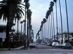 gm_03700 Hollywood, Palm Tree Street 1983 (CanadaGood) Tags: california ca usa color colour tree car analog america palms la losangeles automobile parking slidefilm hollywood vehicle streetphoto 1983 kodachrome eighties canadagood exactlocationuncertain slidecube