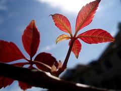 Summer leaf.