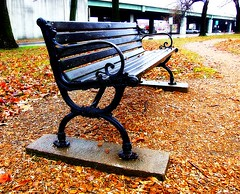 Willard Library Bench on a Rainy Day (mightyquinninwky) Tags: park trees leaves bench geotagged interestingness path library indiana southernindiana explore picnik flickrfaves rivercity ohiorivervalley willardlibrary twtme abigfave ohiorivercity evansvilleindiana heartawards flckrhearts downtownevansville platinumheartaward vandenburghcountyindiana photographersgonewild mightyquinninwky mightyquinninlex mqil mqiw geo:lat=37977779 geo:lon=87574092 downtownhistoriddistrict exploreformyspacestation bestofformyspacestation