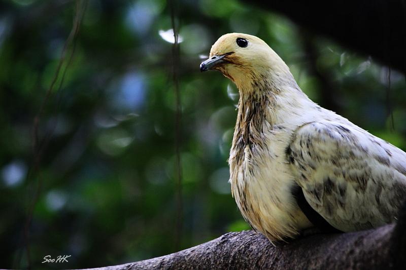 Curious @ Bird Park KL, Malaysia