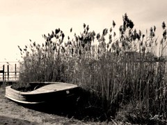 (yellow birds fly) Tags: ocean sea lake sepia boat newjersey nj meadows canoe lbi shore jerseyshore feild
