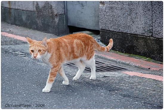 [台北]Cat。極簡咖啡-散步貓
