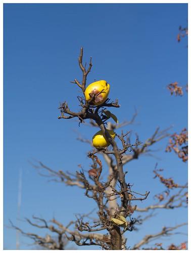Fruits 081227 #01
