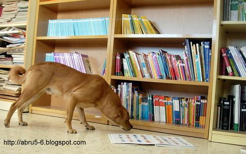 En mi clase hasta los perros leen.