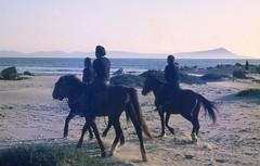 Mejicoooooo (Pierre♪ à ♪VanCouver) Tags: horse mexico mexique cheveaux riding horseriding sofarsocute bajacalifornia lilabelrus skinoo46 frulio7 deceased