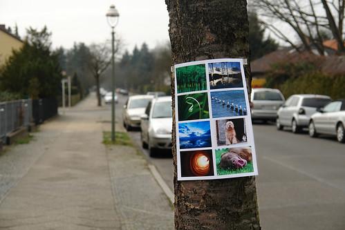 Flickr wird 4 -- In freier Wildbahn