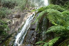 Steavenson's Falls