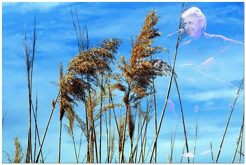 al vent: el espíritu del 68
