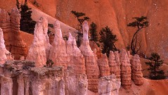 Bryce Canyon NP. 503-29. (Tiina Gill (busy)) Tags: landscape utah redrock brycecanyon