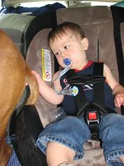 Matt checks out Petey's tail (wrecklessweetie) Tags: trip dog pet baby cute matt toddler matthew adorable cutie 1yearold boxer 12months 12monthsold carride drivingnorth rescuedog bullybreed mattandtahoe mattandpetey