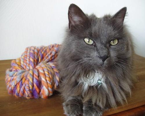 sitting pretty with yarn