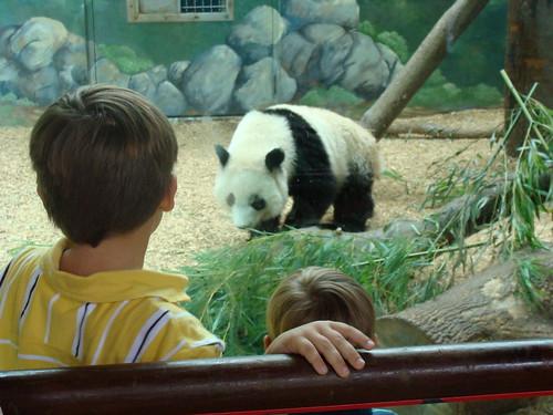 atlantazoo babypanda