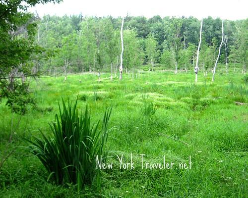 Nichols Pond Wetland