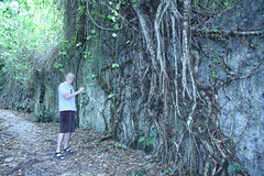Ian and tree roots