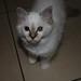 Remco's kitten 6