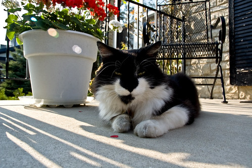 Loungin on the stoop.
