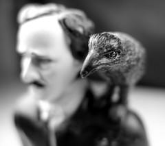 The raven (Edgar Allan Poe) (kevin dooley) Tags: old bw white black never macro bird closeup studio toy allan poem dof allen bokeh quote year poetic best plastic explore more edgar poet cousin 13 shoulder drama raven der poe raaf kruk cuervo rabe corvo edgarallenpoe edgarallanpoe theraven nevermore corb corbeau hrafn kuzgun quoth korp gagak quothe havran  ravn  ronk korppi krokar varnas krauklis holl  krkavec