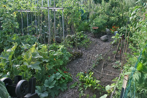my community garden plot