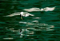 #319  (Good discipline) (John&Fish) Tags: bird nature wow fantastic bravo taiwan best inspire 2008 supershot ar1 ishflickr thebestpicturegallery alemdagqualityonlyclub lesamisdupetitprince
