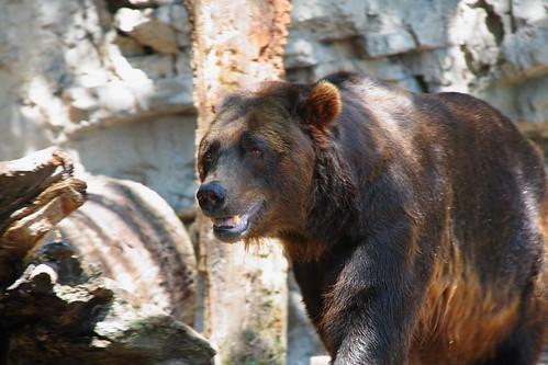 Bear3_IMG_0232