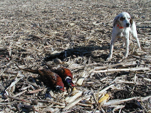 pheasants11-17-05gypsy