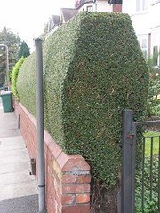 Hedge Triming and Sculpture