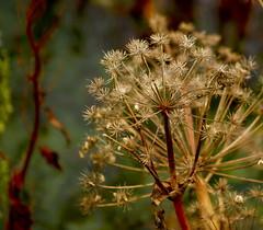 Autumn (Inga D. Sig) Tags: autumn iceland islandia grandmother thumbsup sland bigmomma olympuse500 photofaceoffwinner pfogold achallengeforyou ingadsig 3wayassignment80 motmjan09 motmmar09
