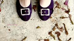Violet! (nafts) Tags: flowers flores feet sol fleurs canon photographie purple photos violet nat soil photograph fotos pés chão fotografia pieds buckles roxo mortas boucles s5 deceased pisadas natália steppedon fivelas défunts s5is fcachenco naft nafts foulés