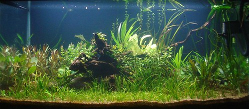 WCPTS : Planted Tank 2