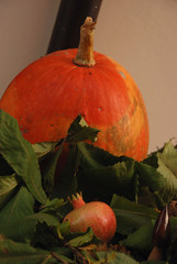 i colori dell'autunno (francesca sara) Tags: autumn party fall leaves foglie pumpkin mushrooms leaf october wine valle funghi foglia redwine festa autunno challenge sagra vino zucca emiliaromagna melograno romagna ottobre castagna vinorosso concorso e45 cagnina sarsina colorphotoaward sagradellacastagna ranchio