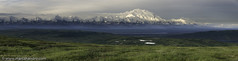 Denali Dawn (Marc Shandro) Tags: morning summer panorama mist snow mountains green alaska dawn lakes arctic backpacking valley denali mckinley tundra zoomify veryhighresolution getty2