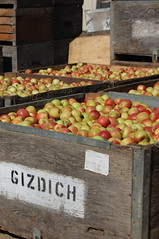 Gizdich Farm Apples