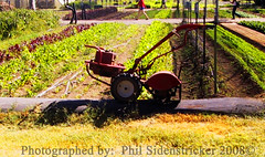 Farm Equipment (phil_sidenstricker) Tags: plants farmequipment simplelife donotcopy valleyofthesunphoenixmetro upcoming:event=981998 southmountainfarmphornixazusa farmplants