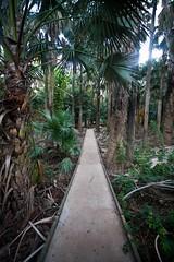 Mataranka, NT (C) 2008