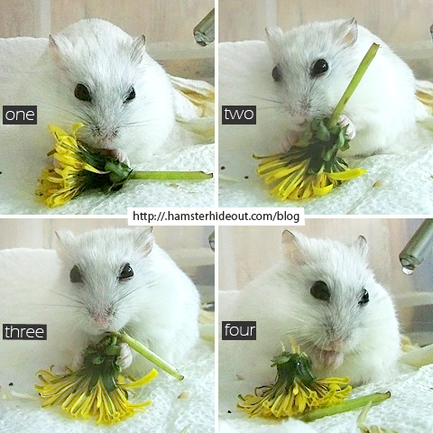 Hamster's guide to flower arrangement