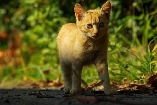 Stray Cat #15