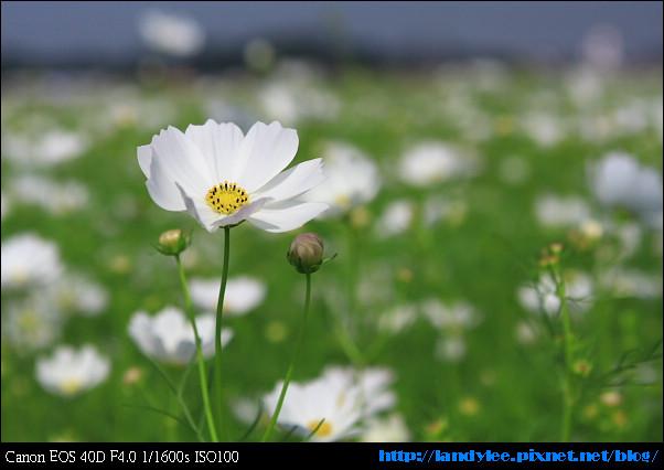 9711新社花海+安妮_039.jpg