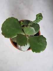 IMG_0164 (Plantules) Tags: