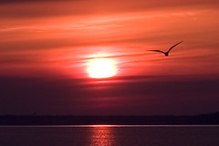 Red sunset and gull (moelynphotos) Tags: california sol beach scenery gull sunsets tranquility naturalbeauty redsunset scenicview sunsetatthebeach californiasunset romanticview spectacularsunsetsandsunrises sunsetsandsunrisesgold moelynphotos artofatmosphere rainbowelite