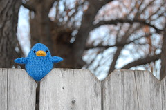 Twitter Bird on the Fence