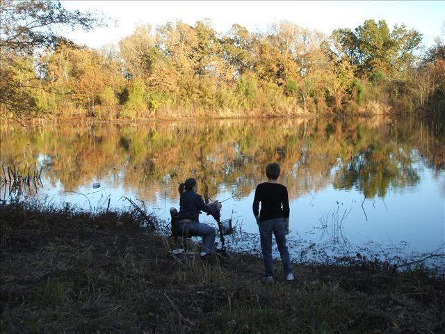 Pond in November