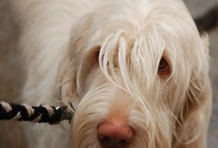 bob (bruna_d80) Tags: cane occhio sestrilevante canebianco