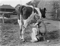 Koeien melken / Milking a cow (Nationaal Archief) Tags: woman cow big fave clogs vee milking noordholland waterland koe woodenshoes klompen melken waldschmidt dairymaid nationaalarchief clickcamera willemvandepoll milkacrossthecommons