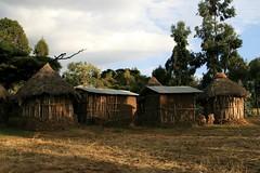 Meket escarpment trek 041 (MikeManning) Tags: travel ethiopia 2008 rtw wollo tesfa meket