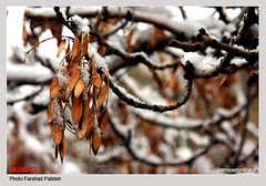 welcome to winter in Tehran 2008 (FarshadPix) Tags: street city autumn winter orange white snow nature landscape photography newspaper leaf interesting day iran snowy barf tehran  sq resalat farshad           1387  jamejam   sigma1770       canon40d paiez palideh  farshadpix jamejamonlineir