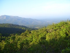 Way to Thadiyendamol (hnprashanth) Tags: trekking madikeri thadiyendamol honeyvalley