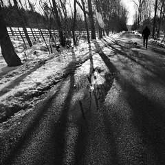 christmas walk (bex finch) Tags: road birthday christmas trees winter sun snow cold reflection square puddle blackwhite dad day shadows pavement walk flare figures coarse 10mm theflarelookslikeavenndiagram ialwayshatedthosethings